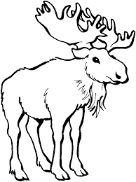 moose clipart black and white pencil and in color moose clipart