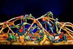 Cirque_du_Soleil_Totem_1.jpg