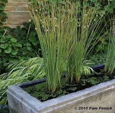 21 best container water gardens images on pinterest landscaping