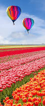 Netherlands Tulip Fields 544 Best Lente Spring Images On Pinterest The Netherlands Dutch