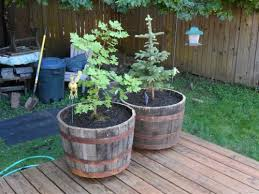 25 in dia oak whiskey barrel planter b100 at the home depot mobile