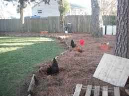 julie u0027s pallet coop backyard chickens