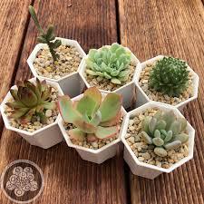 mini plants succulents mini set 6 plants succulents australia sales