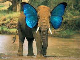 elephant butterfly worth1000 contests look