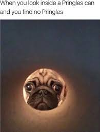Depressed Pug Meme - downright depressing images you might laugh at thechive