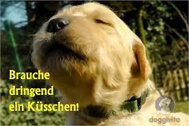 bilder sprüche kostenlos runterladen viele lustige hundebilder auch zum gratis runterladen alles für