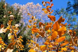 Most Beautiful Colors by Autumn Colours Dan U0027s Wild Wild Science Journal Agu Blogosphere