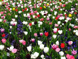 Spring Flower Garden Free Images Petal Spring Botany Garden Flora Flowers