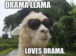 Alpaca Memes - alpaca and llama jokes home facebook