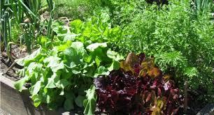 a beginner u0027s guide to vegetable gardening tui garden