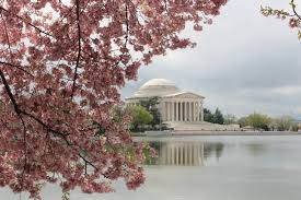 National Cherry Blossom Festival by Worlds U0027 Most Dramatic Cherry Blossom And Tulip Festivals Wicked