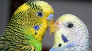 uv light for birds want ultraviolet vision you re going to need smaller eyes