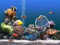 arriere plan bureau animé fond d écran aquarium gratuit