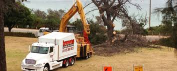 browns tree tree removal trimming mornington peninsula flinders portsea