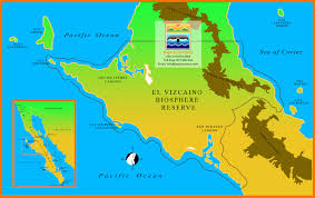 Map Of Cabo Mexico by Baja Ecotours The Vizcaino Biosphere