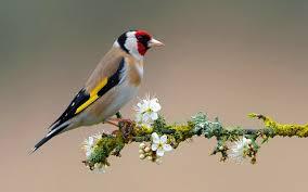 Flower And Bird - bird on flower branch wallpapers 2560x1600 1485321