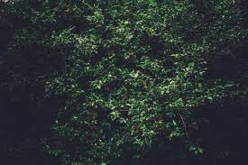 Gray Green by Free Stock Photos Of Plants Pexels