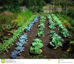 Decorative Vegetable Garden by Vegetable Garden Stock Photo Image 44006565