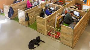 Comfort Pet Certification How To Be A Pet Friendly Employer