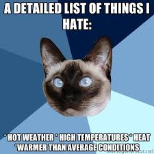 Hot Weather Meme - tuesday 25 august 2015 meme images 皓 chronic illness cat