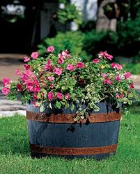 self watering whiskey barrel gardener u0027s supply company