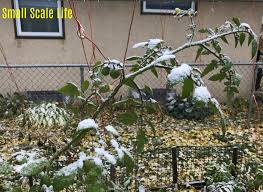 7 steps to winterize your garden s2e26 small scale life