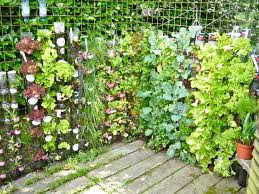 Wooden Vegetable Garden by Recycled Plastic Bottle Vertical Garden On The Wire Fence Patio
