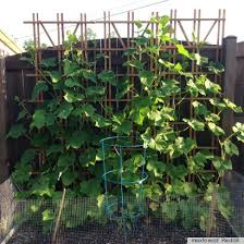 small space gardening idea uses a trellis to grow vegetables