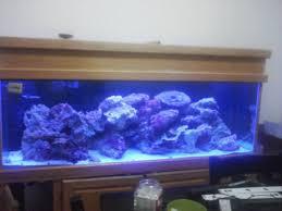 stunner led aquarium light strips led fish tank lighting ecorenovator