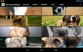 cute dogs wallpaper android apps on google play
