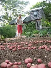 237 best edible gardening images on pinterest organic gardening