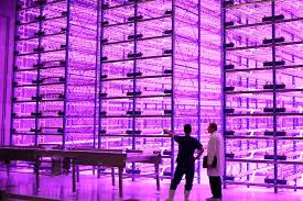 growing plants indoors with artificial light indoor vertical farm pinkhouses grow plants faster with less