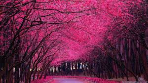 beautiful spring spring trees