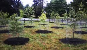 Fruit Tree Garden Layout Fruit Tree Yard Design Landscaping And Gardening Design