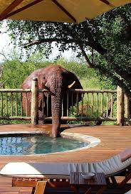 455 best safari living images on pinterest safari lodges and