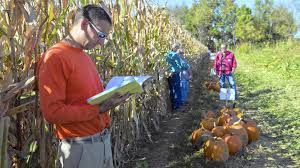 Great Pumpkin Blaze Membership by Pumpkin Growers Gather To Hear About The Latest Fashions The