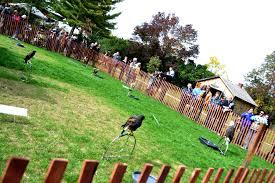 bum warmers and barn owls 38th annual balls falls thanksgiving