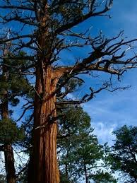 problems with trees why tree branches are weak and brittle