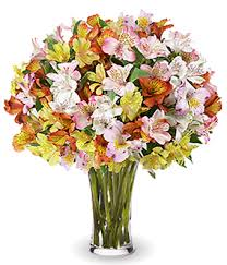 peruvian lilies radiant peruvian lilies at from you flowers