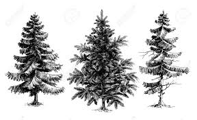 pine trees trees realistic vector set