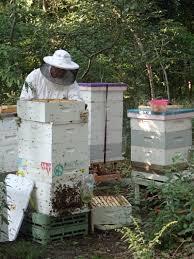 beekeeping supplies bonac bees
