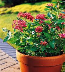 top butterfly container garden ideas