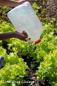 love bug living milk jug watering can