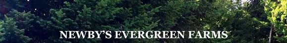 christmas tree care tips from newby u0027s evergreen farms