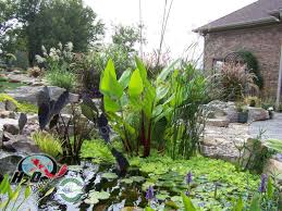 native uk pond plants garden design garden design with anglo water plants wholesale