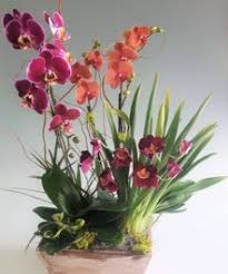 Orchid Delivery Fresh Orchid Delivery Seattle Washington