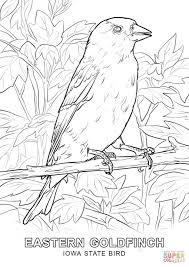 iowa state bird coloring page free printable coloring pages