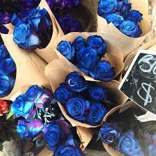 Blue Roses For Sale 81 Best Flowers Images On Pinterest Flower Power Romance And