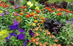 Fertilizer For Flowering Shrubs - blog pleasant view gardens