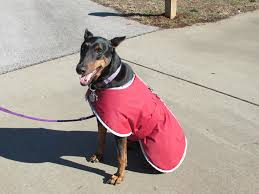 winter 2015 in the gardens friends of the garden
